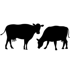 Cow silhouette grazes an standing isolated on vector