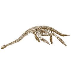 engraving plesiosaurus skeleton vector image