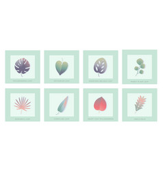 Set isolated green leaves with shadow vector