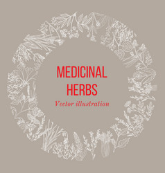 vintage collection of hand drawn medicinal herbs vector image