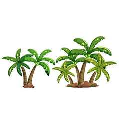 Coconut trees vector image