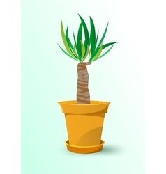 houseplant - yucca plant in a pot vector image