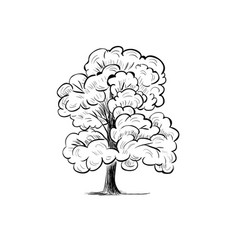 tree sketch hand drawing silhouette tree vector image