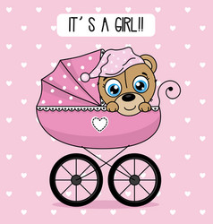Bear inside baby cart vector