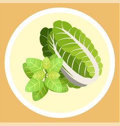 Chinese cabbage and basil leaves natural organic vector