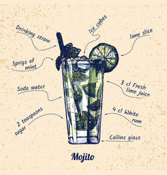 cocktail mojito and its ingredients vector image