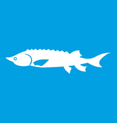Fresh sturgeon fish icon white vector