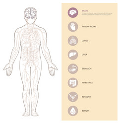 Human body anatomy infographic with brains the vector