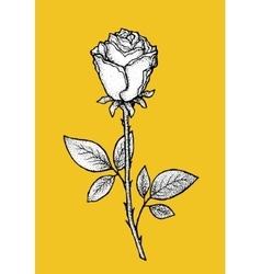 Rose Art for t-shirt design vector