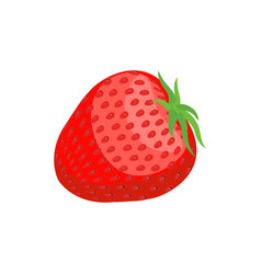 Strawberry juicy isolated fresh red berry on vector