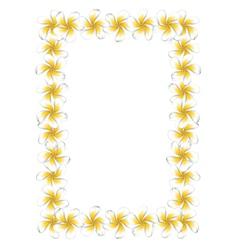 White frangipani flowers frame vector image