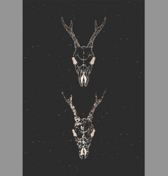 With two variants hand drawn roe deer skulls vector