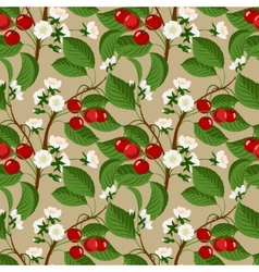 Seamless pattern with cherry berries and blossom vector image vector image