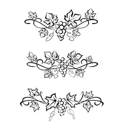 grape branchs and leaves vector image