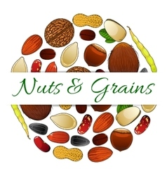 Nutritious nuts and grains elements label vector image