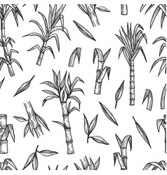 Sugar plant seamless pattern hand drawn sugarcane vector