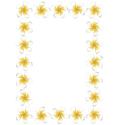 White frangipani flowers frame3 vector image