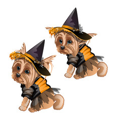 Yorkshire terrier in witch costume isolated vector