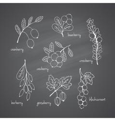 Set of garden and wild chalk hand-drawn berries vector image