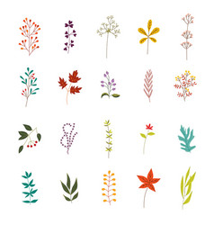 Autumn plants and leaves set with various foliage vector