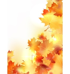 Background with maple autumn leaves plus EPS10 vector image vector image