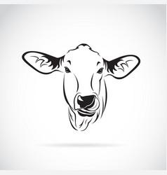 cow head on white background calf vector image vector image