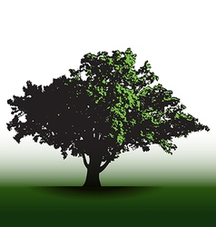 A large glorious old oak tree vector