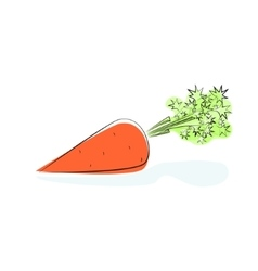 Carrot Isolated on White Background vector image