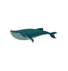 flat icon of blue whale large marine vector image