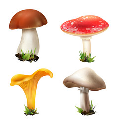 Realistic forest mushrooms collection vector