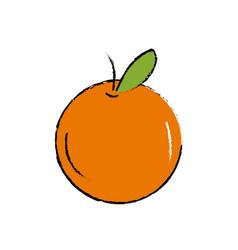Delicious and healthy orange fruit vector