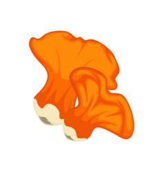 big and little orange lobster mushrooms isolated vector image