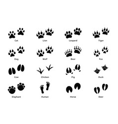 animals footprints paw prints set of different vector image