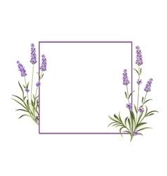 Bunch of lavender vector