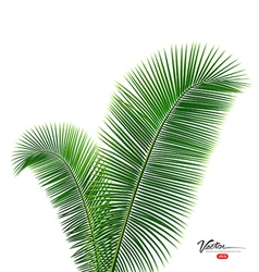 Coconut leaves design background vector