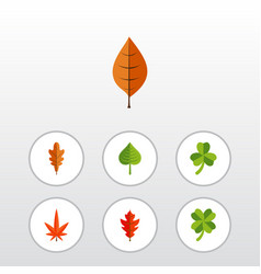 Flat icon leaves set aspen frond hickory and vector