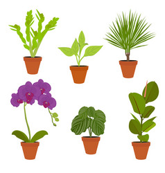 various potted houseplants garden potted plants vector image