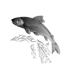 Trout jumps in stream salmon-predatory fish as wr vector
