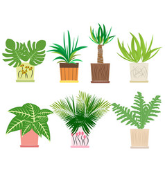 set of colorful houseplants in pots vector image