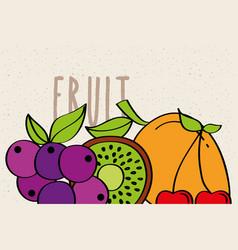 grapes mango kiwi cherry fruit fresh banner vector image