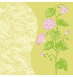 Flowers Ipomoea and abstract pattern vector image vector image