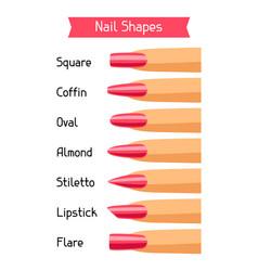 acrylic nail shapes set vector image