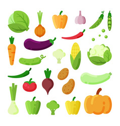 different vegetables color flat vector image