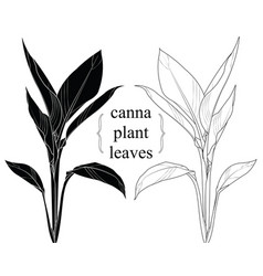 hand drawn silhouette canna leaves vector image