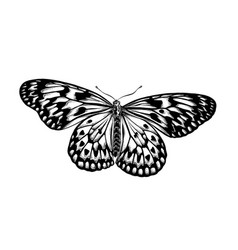 hand drawn sketch butterfly in black color vector image