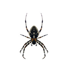 insect spider vector image