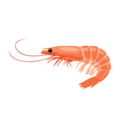 shrimp icon in flat style fresh sea food vector image