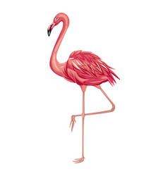 flamingo exotic tropical bird vector image