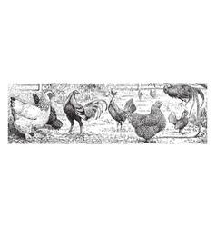Kinds of fowl vintage vector