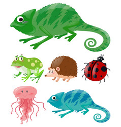 lizard and other animals vector image
